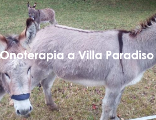 Onoterapia a Villa Paradiso